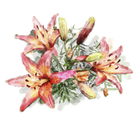 lilia: watercolor illustration of bouquet of lilies