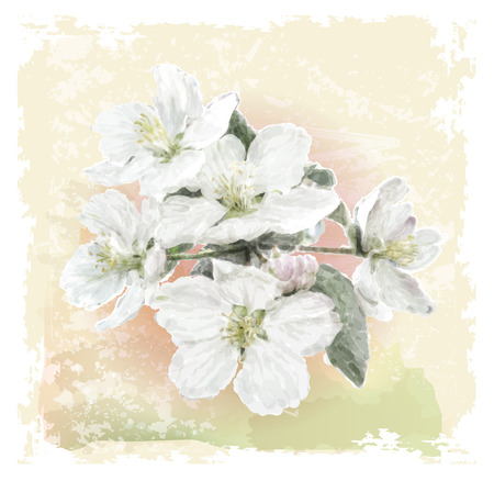 bg: Apple flower blossoms in full bloom Illustration