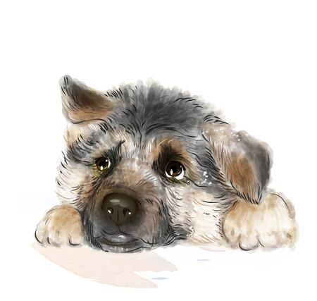 ジャーマン シェパードの子犬の肖像画  イラスト・ベクター素材