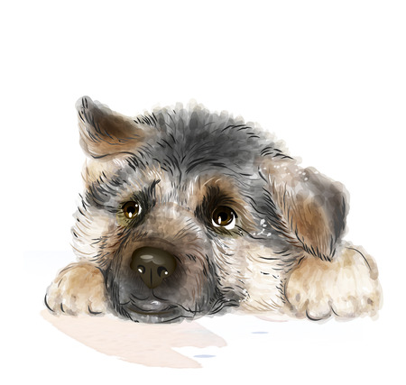 pups: portrait of the german shepherd puppy Illustration