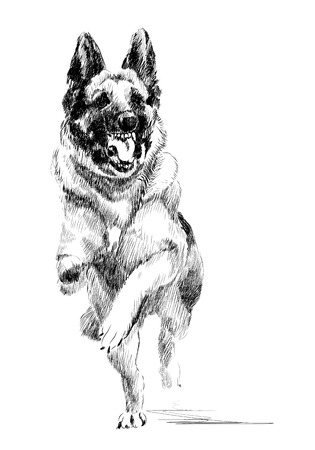 jumping: ink portrait of the  running german shepherd dog