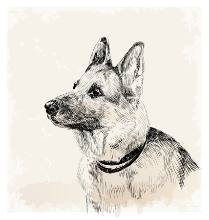 shepherd: ink portrait of the german shepherd dog