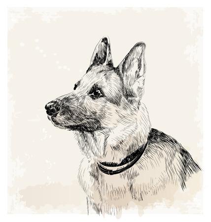 ink portrait of the german shepherd dog