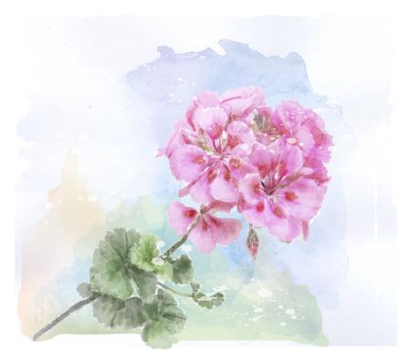 hand drawn  watercolor pink geranium flower Vettoriali