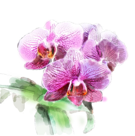 floriculture: watercolor illustration of orchid brunch