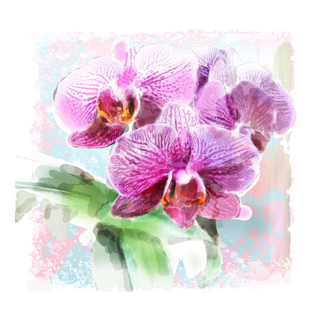 hand painted: watercolor illustration of orchid brunch