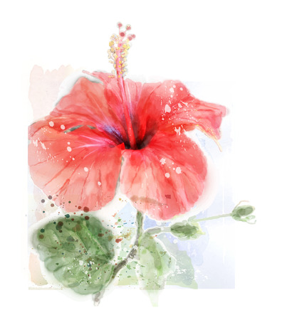 floriculture: imitation of watercolor illustration of red hibiscus