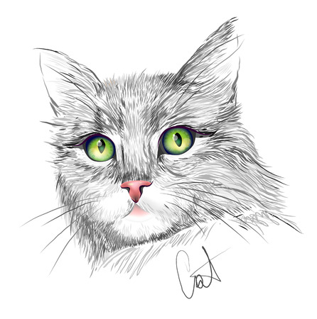 grey cat: Portrait of the grey cat