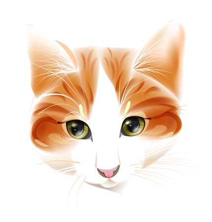 pussy: portrait of the ginger cat