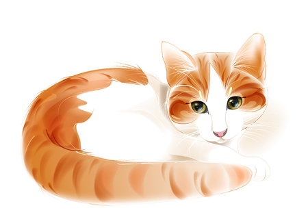 portrait of the ginger cat