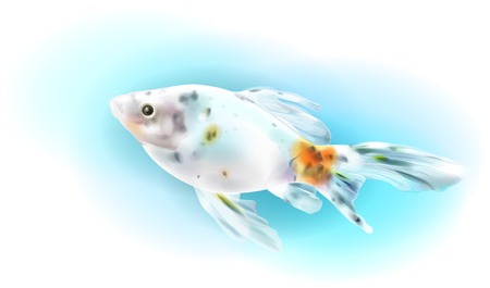 aquarian: Goldfish in the sea.  Aquarium fish. Realistic  illustration.