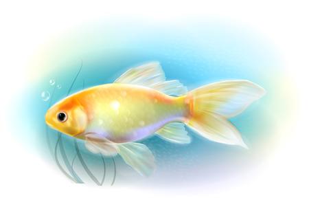 aquarium hobby: Goldfish in the sea.  Aquarium fish. Realistic  illustration