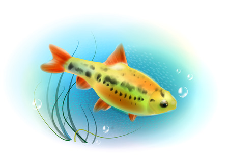 aquarian: Beautiful fish in the sea.  Aquarium fish.  Underwater world. Realistic  illustration. Illustration