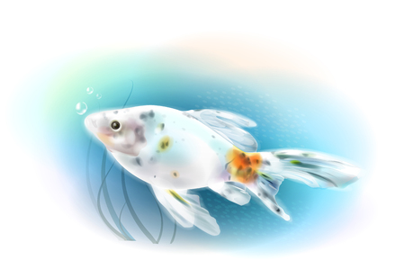 aqueous: Goldfish in the sea.  Aquarium fish. Realistic  illustration