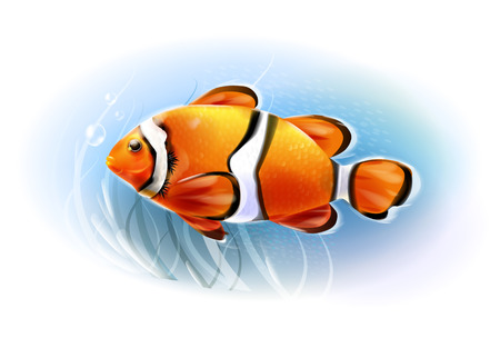 amphiprion: Beautiful clownfish in the sea.  Aquarium fish.  Underwater world. Realistic  illustration.