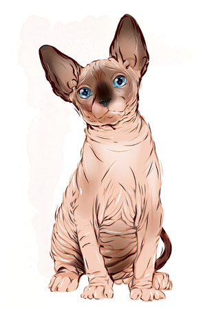 the sphinx: portrait of the  Canadian sphinx cat Vectores
