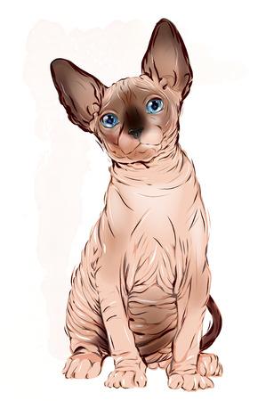 portrait of the  Canadian sphinx cat Illustration