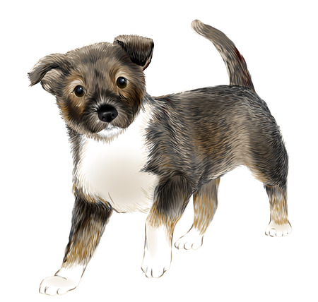 whelp: portrait of the  cute puppy Illustration