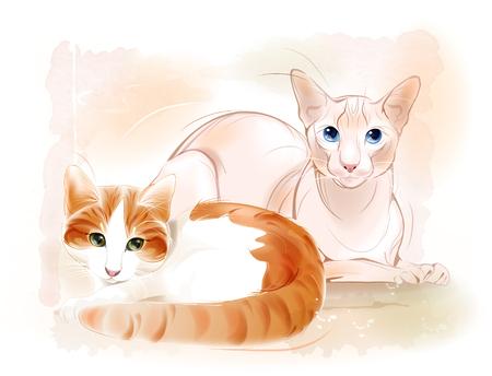 esfinge: Un par de gatos en el fondo de la acuarela. Gato del jengibre y el gato esfinge.