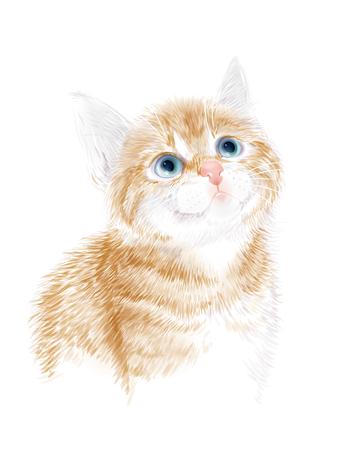 pet cat: Little kitten the red marble coloring.  Ginger fluffy kitten. Portrait oh the cat. House pet. Suitable for t-shirt design Illustration