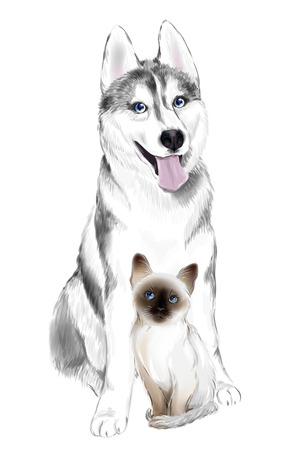 White And Gray Adult Siberian Husky Dog and Thai Kitten.