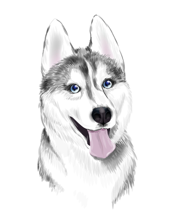 White And Gray Adult Siberian Husky Dog Or Sibirsky Husky With Blue Eyes . Face of dog. Illustration
