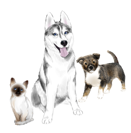 White And Gray Adult Siberian Husky Dog, Pooch Puppy and Thai Kitten are Friends. House pets. Stock Vector - 79080880