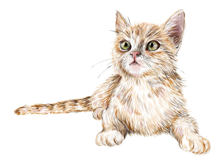 hand drawn realistic portrait of the lying ginger kitten  Illustration