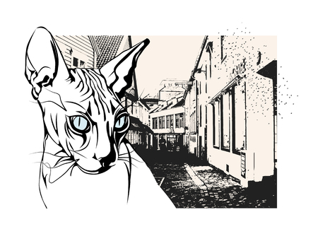 Sphinx cat in the old European city  イラスト・ベクター素材