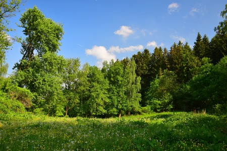 Bavarian landscape with a meadow and trees under a blue sky. Upper palatinate, county of Cham, Bavaria, Germany.