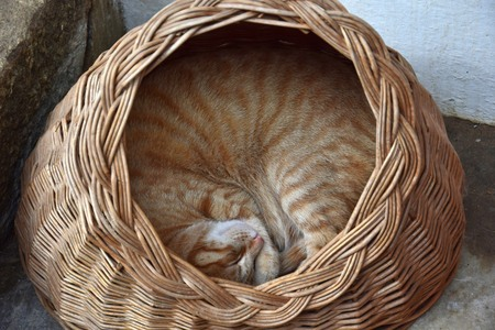 A ginger tabby cat lying curled up in a basket with a round opening, sleeping. Outdoor cat.