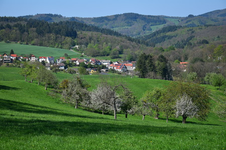 The small town Oberflockenbach in the Odenwald in spring. Some white-flowered trees in front. Weinheim, Baden-Württemberg, Germany.