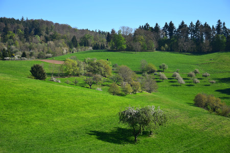 A spring landscape with some white flowered trees in the Odenwald near Rippenweier, Weinheim, Baden-Württemberg, Germany.