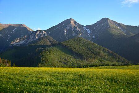 The two highest mountains of the Belianske Tatra, Havran and Zdiarska vidla, in the evening sun. A flower meadow in front. 版權商用圖片