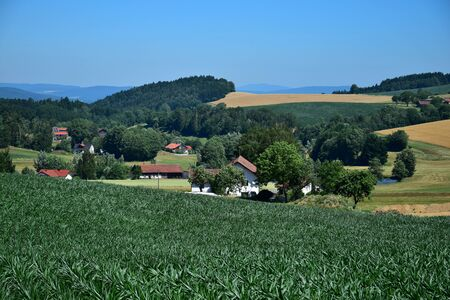 A small town in Bavaria in the summertime. A maize field in front, a few houses in the background. Municipality of Traitsching, district of Cham, Upper Palatinate.