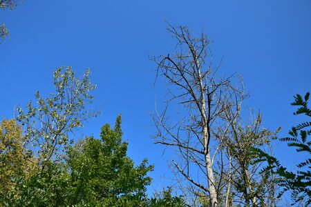 Trees suffering from a long period without rain at the end of august. Some are completely bare. Stock Photo