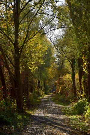 Autumn landscape with a path in a forest. Oberhausen-Rheinhausen, Baden-Wuerttemberg, Germany.