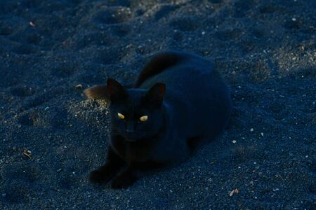 A black cat lying in the shadow with bright yellow eyes. 版權商用圖片