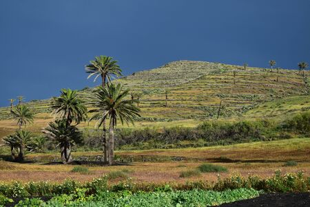 The sun comes out after a thunderstorm. Palm trees and horticulture. The area around Haria is more fertile than the rest of Lanzarote. Canary Islands, Spain.