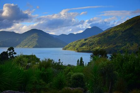 The Marlborough Sounds in the evening sun. A variety of plants in front. New Zealand, South Island.