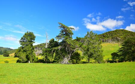 Landscape in New Zealand, South Island. A row of beautiful trees and a green meadow.