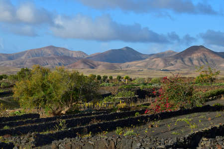 Beautiful landscape in Lanzarote. A garden with a flowering bougainvillea and little lava stone walls. View to the mountain massif Los Ajaches. Lanzarote, Canary Islands, Spain.