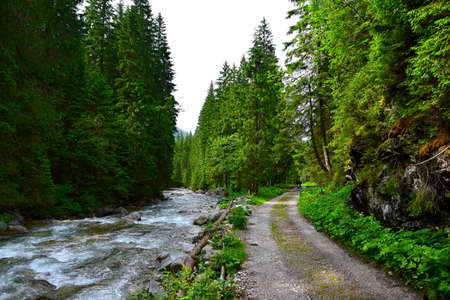 Landscape in the High Tatras. The river Biela voda in the canyon Bielovodska dolina flowing next to the hiking trail. Border between Poland and Slovakia.