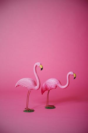 스튜디오에서 두 키치 분홍색 홍학