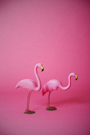 Two kitsch pink flamingoes in studio