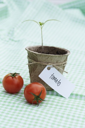 western script: Seedling growing in pot with tomatoes