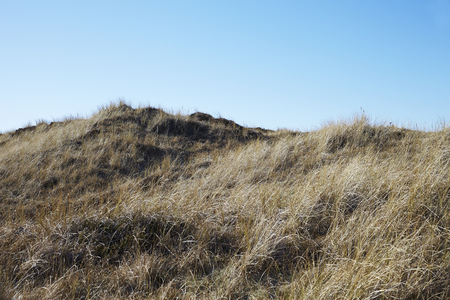 physical geography: Scenic view of grassy field in Skagen, Denmark