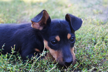 small puppy lying on the grass