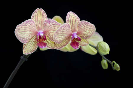 Beautiful orchid on a black background Foto de archivo