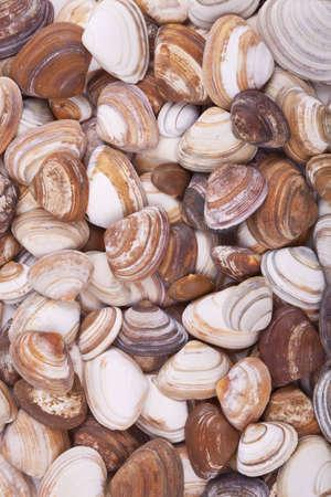 Brown and orange sea shells background, shells found on a Dutch beach
